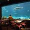 Refeição com personagens no Sea World: vocês preferem com tubarões ou com baleias?