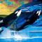 """Sea World lança o """"Blue Friday"""", com entradas gratuitas para as crianças!"""