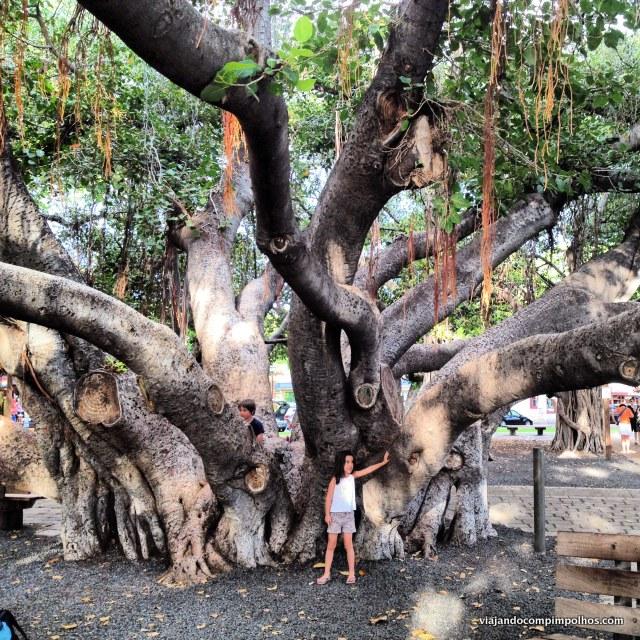 Maui's Banyan Tree