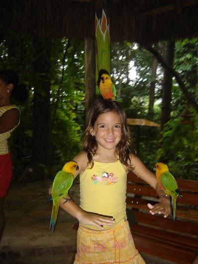 Bird-Land