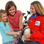 Penguins Up-Close Tour no SeaWorld: uma visita para aprender e se apaixonar por pinguins