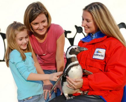 Penguins Up-Close Tour no SeaWorld: uma visita para aprender e se apaixonar por pinguins